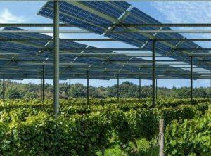 Boven alle rijen wijnranken op circa tweeënhalve meter hoogte zonnepanelen
